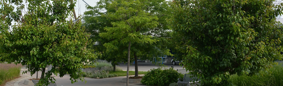 Creating a Business Case to Invest in Urban Greening