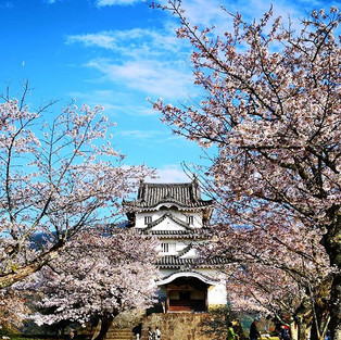 Uwajima is one of 12 original castles, a