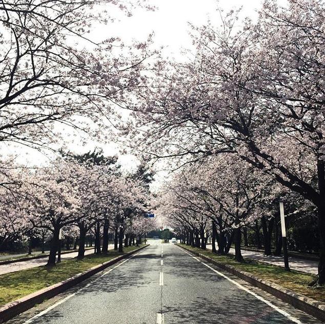 1] Kyushu is my happy place. 🌸 #sakura