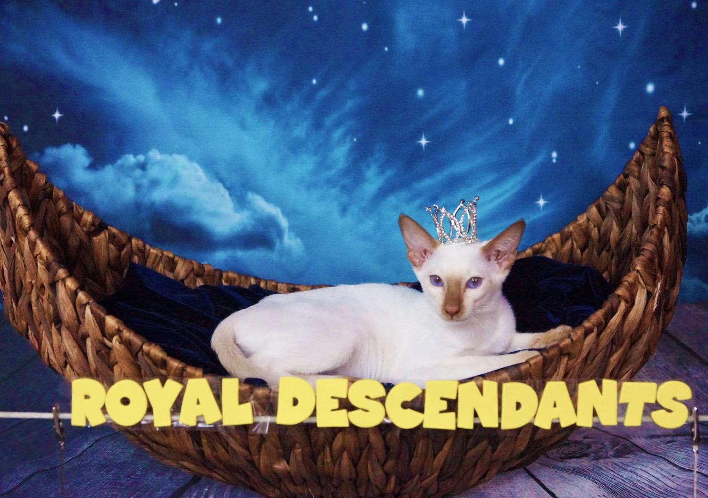 Royal Descendants Xia BONITA