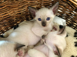 Blue eyes... babies got blue eyes
