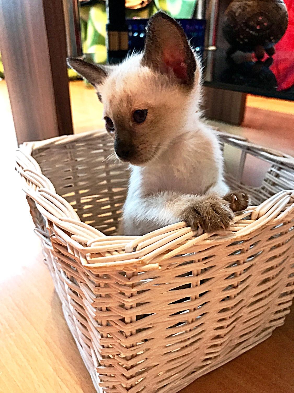 Aragon als Kitten