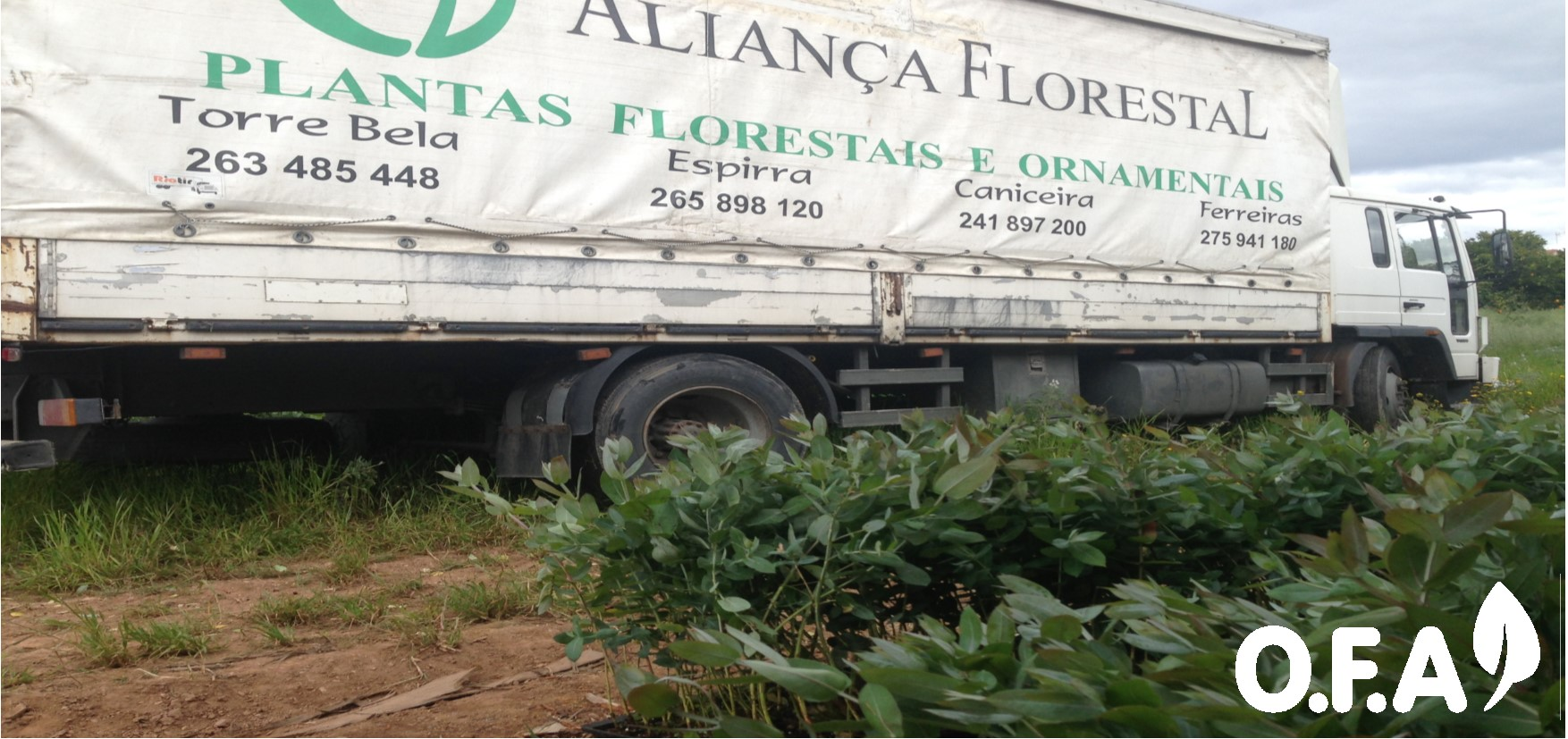 Plantas dos Viveiros Aliança