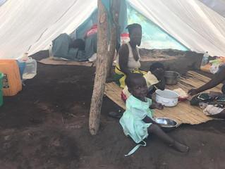 Neuer Bericht von der Fazenda Mosambik