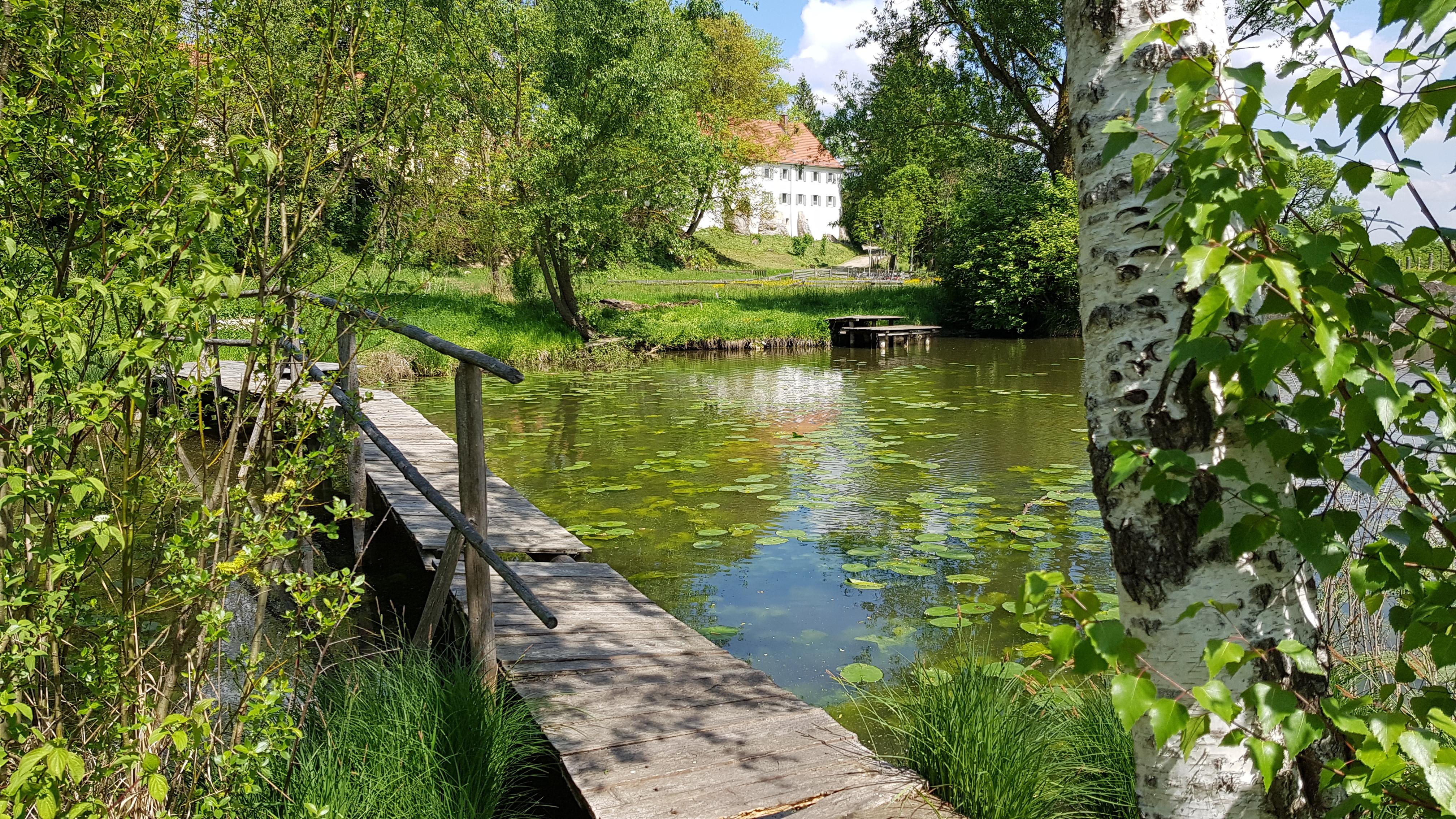 Idylle pur: Unser Teich am Haus