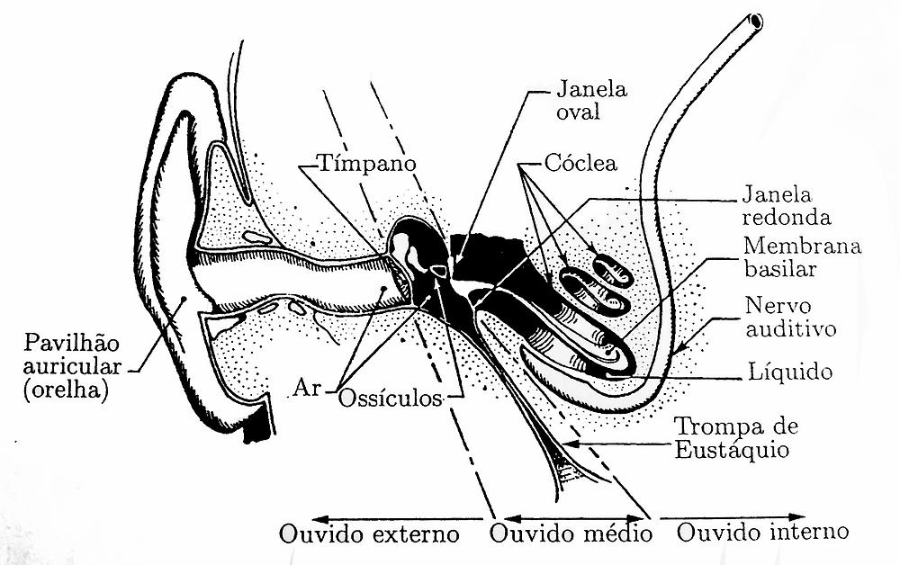 Figura do ouvido humano identificando as estruturas internas e suas divisões