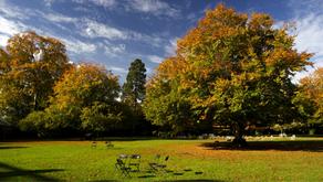 Que faire en Irlande pendant l'automne ?