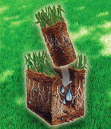 Lupine provides fast affordable lawn aeration services to Durango, CO.