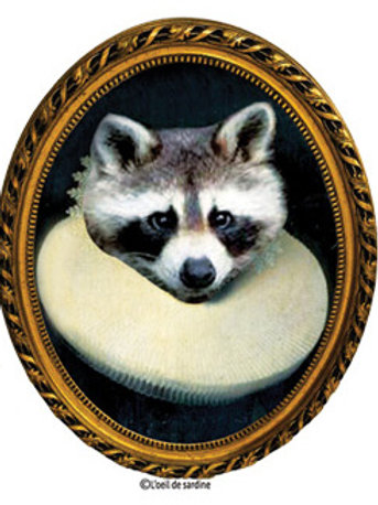 "STICKER ""Raccoon"""