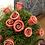Thumbnail: Rose
