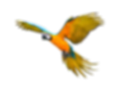 Colorful%252520flying%252520parrot%25252