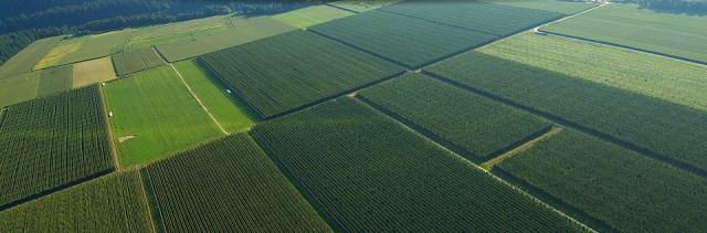 Plantações de lúpulo na Eslovênia / Imagem: Reprodução