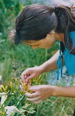 Pollinating daylilies
