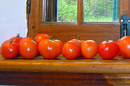 Tomate KALINKA