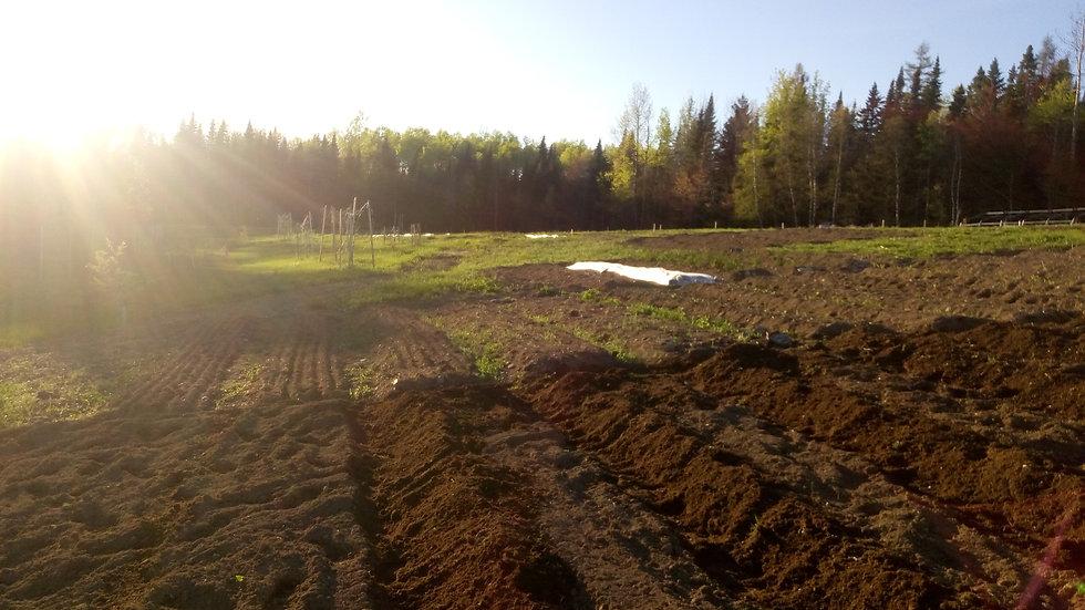 parcelles de terre au printemps
