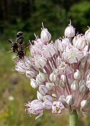 Pollinisation | Pollination