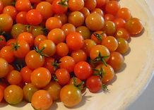 tomate-rybizove-tomato72.jpg