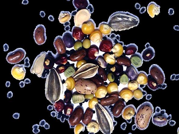 semences diverses.png