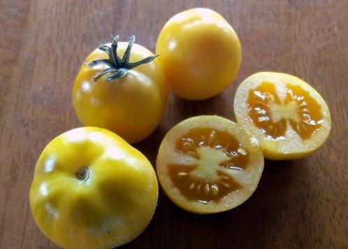 Tomate POMODORO REGINA DI TORRE CANNE