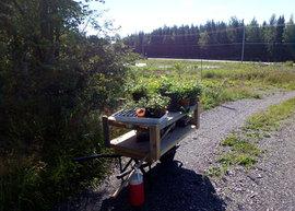 Chariot   Cart