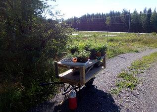Chariot | Cart