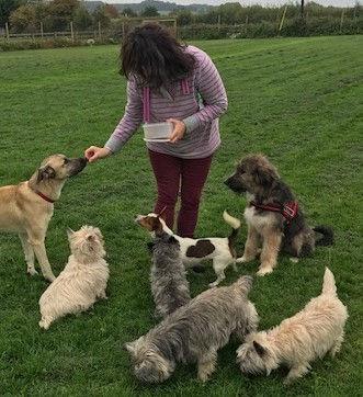 5 - 8 dogs half hour
