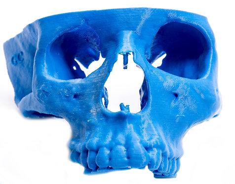 3D printed Maxilar Anatomical model