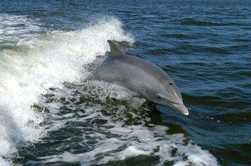 Dolphins 1.jpg