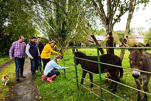 Group-outside-with-Donkey,-Limerick-with