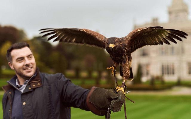 falconry-man-and-bird-3-1-1920x1200.jpg