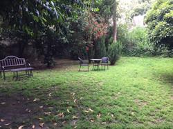 Lush Backyard