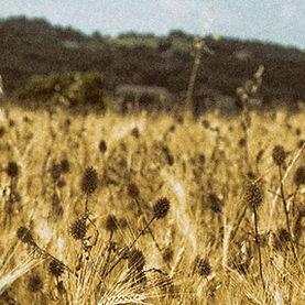 azienda-agricola-montalcino.jpg