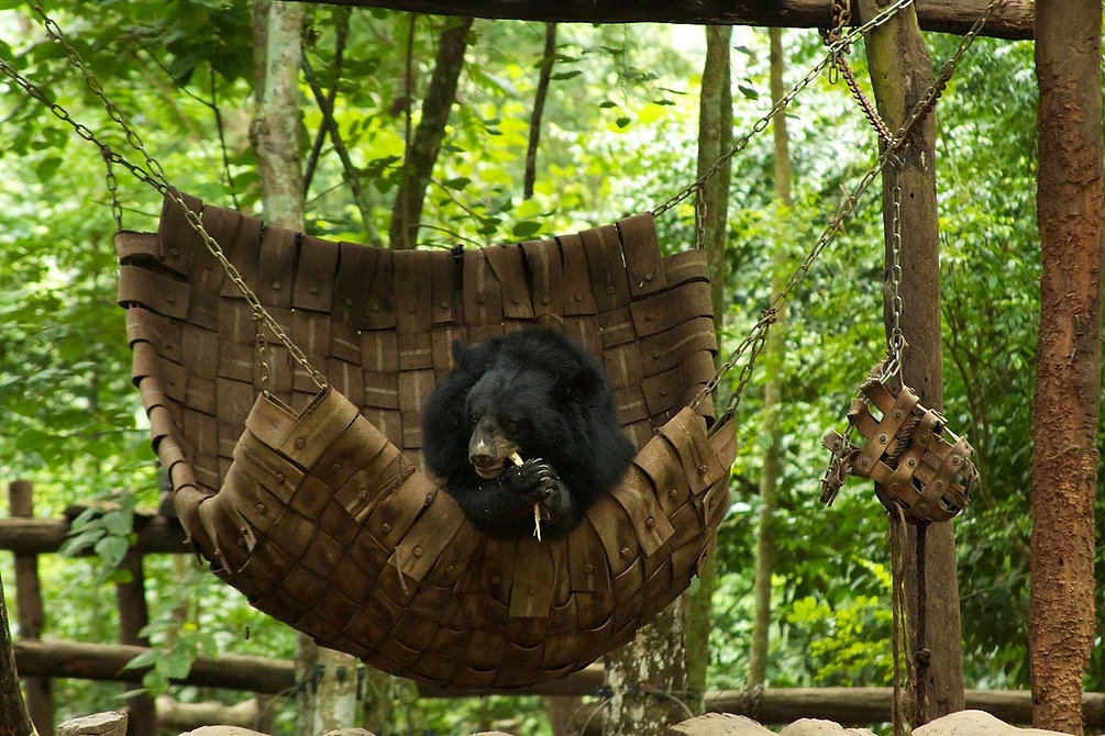 Kuang Si Waterfall & Bear Rescue Centre