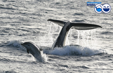 odo_idp_striped-dolphin-and-sperm-whale