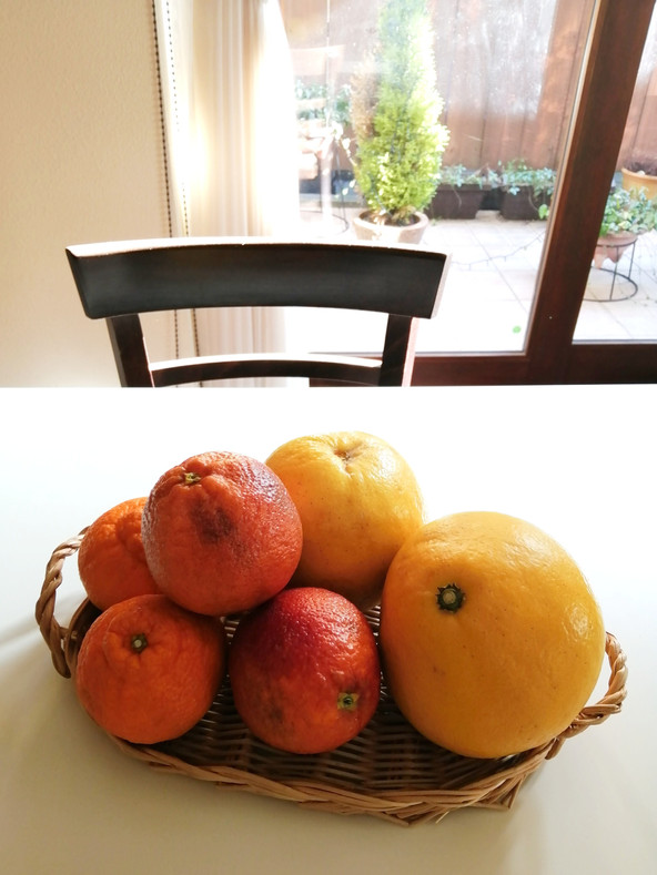柑橘類いろいろ