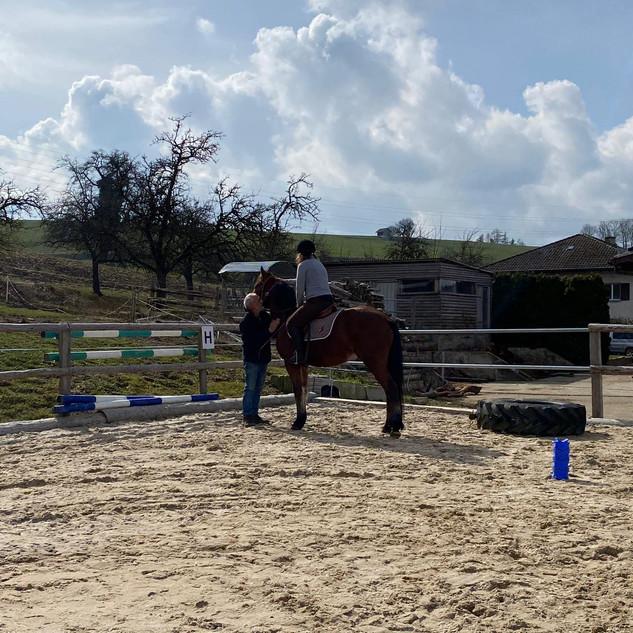 Ausbildung von Freibergerpferden