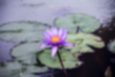 this is waterlilies digital marketing - flower