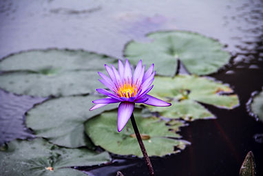 this is waterlilies digital marketing - flower