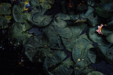 this is waterlilies digital marketing - lily pads