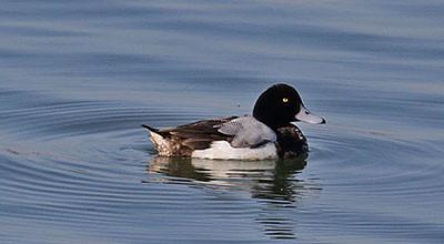 Birding Draycote