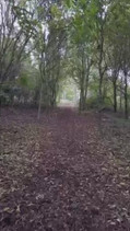 Nature Trail.mov