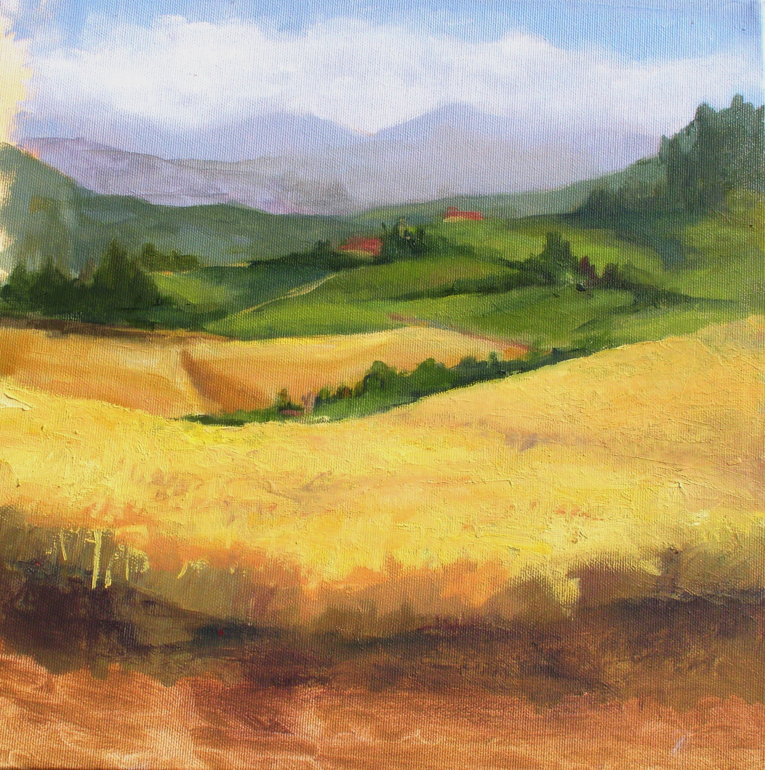 wheat fields, Italy 2017