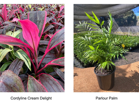 Tropical Foliage For Mothers Day!