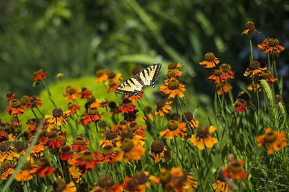 Willow park ecology norval.jpg
