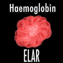Haemoglobin.jpg