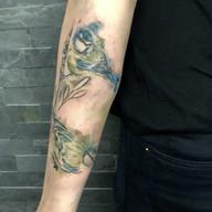 Zvirata tetovani studio Tattoo Mija Prah