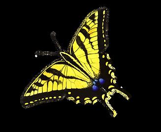 butterflies%25203_edited_edited.png