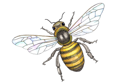 honey%20bee%20in%20color__edited.png