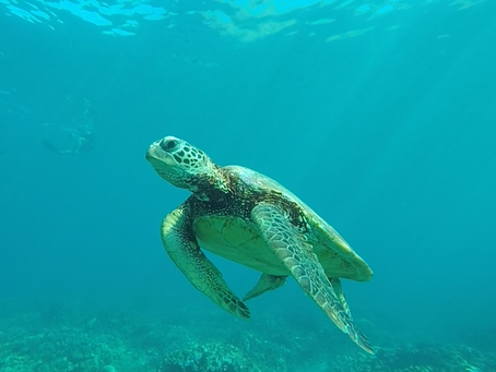 Oahu... Thoughts and Advices After 1-Year On the Island...Come Dive with Us!!!