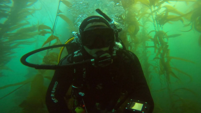 Divers Cove, Laguna Beach